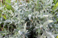 Green vegetative background Royalty Free Stock Images