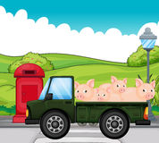 A green vehicle with pigs at the back Stock Images