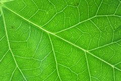 Green veins horizontal Stock Photography