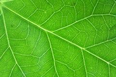Green veins horizontal Stock Photography