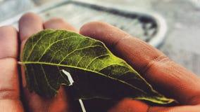 Green veins Stock Photo