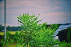 Green veiw