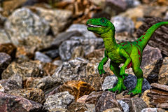 Green Velociraptor dinosaur walking among the rocks Stock Images