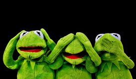 Green, Vertebrate, Frog, Amphibian