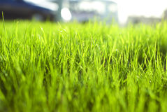 Green vibrant bright grass. Natural beautiful green grass with shallow DOF and nice bokeh lit by bright sun royalty free stock photo