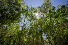 Green vibrant forest with sun shining. Through the leaves Stock Photography