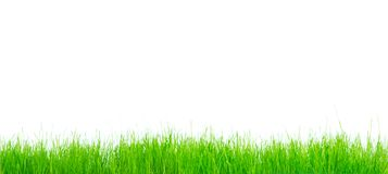 Green vibrant grass Royalty Free Stock Photos
