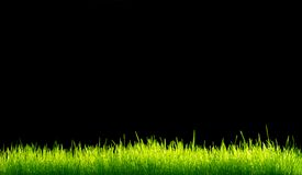 Green vibrant grass Stock Images