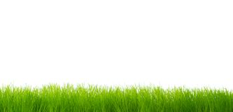 Green vibrant grass Stock Photo