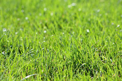 Green vibrant grass Royalty Free Stock Photo