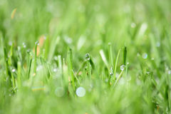Green vibrant grass Royalty Free Stock Photography