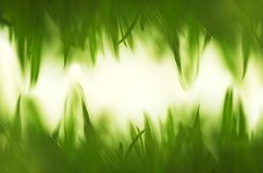 Green vibrant grass background Royalty Free Stock Image