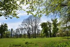 Green vibrant park. Abandoned arboretum in Transylvania Stock Photo