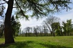 Green vibrant park. Abandoned arboretum in Transylvania Royalty Free Stock Photography