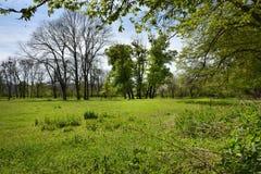 Green vibrant park. Abandoned arboretum in Transylvania Stock Image