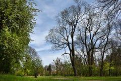 Green vibrant park. Abandoned arboretum in Transylvania Royalty Free Stock Photos