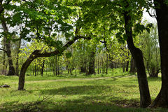 Green vibrant park. Abandoned arboretum in Transylvania Royalty Free Stock Images