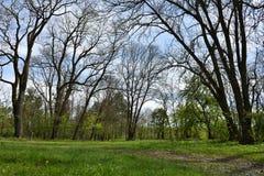 Green vibrant park. Abandoned arboretum in Transylvania Royalty Free Stock Photo
