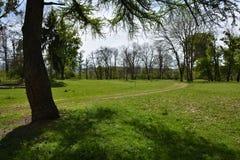 Green vibrant park. Abandoned arboretum in Transylvania Stock Images