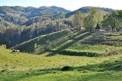 Green vibrant pasture in Transylvania Stock Photography