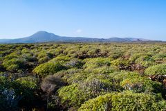 Green view of Lanzarote Royalty Free Stock Images