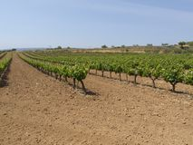 Green vine Stock Photos