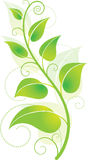 Green Vine. Environmentally friendly green vine with leaves Royalty Free Stock Photo