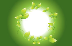 Green vine background Royalty Free Stock Image