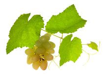 Green vine with grepes on white Royalty Free Stock Images