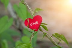 Green Vine with heart on valentines day. Royalty Free Stock Images