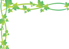 Green Vine Leaf Frame Stock Photos
