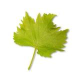 Green vine leaf Royalty Free Stock Image