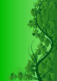 Green vine pattern. Abstract colored background with bunches of grapes and leaves Stock Photography