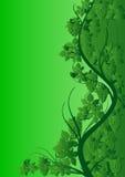 Green vine pattern Stock Photography