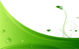 Green vines Royalty Free Stock Image