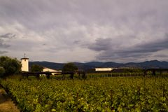 Green Vineyard and Dark Sky Royalty Free Stock Photos