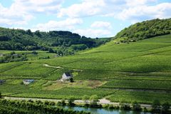 Vineyard in the Mosel region Luxembourg Royalty Free Stock Photography