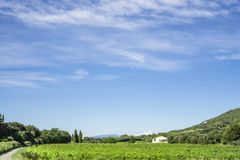Green vineyard and a house beside the mountain under small wave of beautiful white fluffy clouds and vivid blue sky in a summer royalty free stock photos