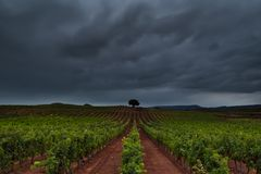 Green vineyard in Najera Royalty Free Stock Photography