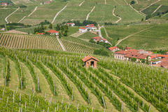 Green vineyard of Piedmont, Italy. Royalty Free Stock Images