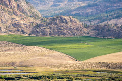 Green vineyard surrounded by dry rocky landscape Royalty Free Stock Photos
