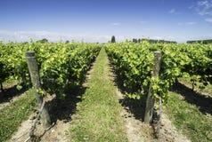 Green Vineyards Royalty Free Stock Photo