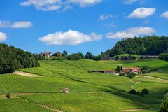 Green vineyards on the hill under blue sky. Stock Image
