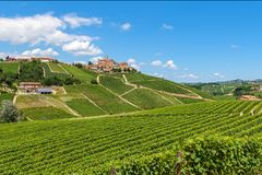 Green vineyards on the hills near Castiglione Falletto, Italy royalty free stock photography