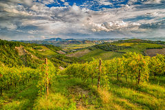 green vineyards of Italian hills Stock Photography