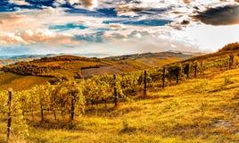 Green vineyards of Italian hills Royalty Free Stock Image