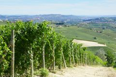 Green vineyards and Italian Langhe hills view in a sunny day. Blue sky Royalty Free Stock Photography