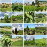 Green vineyards in tuscan countryside. During spring and summer Royalty Free Stock Photo