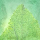 Green vintage background with a texture leaf. Royalty Free Stock Photography