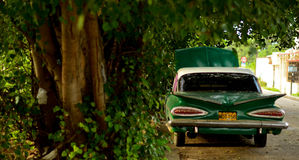 Green Vintage Sedan Under Green Trees on a Sunny Day Royalty Free Stock Images